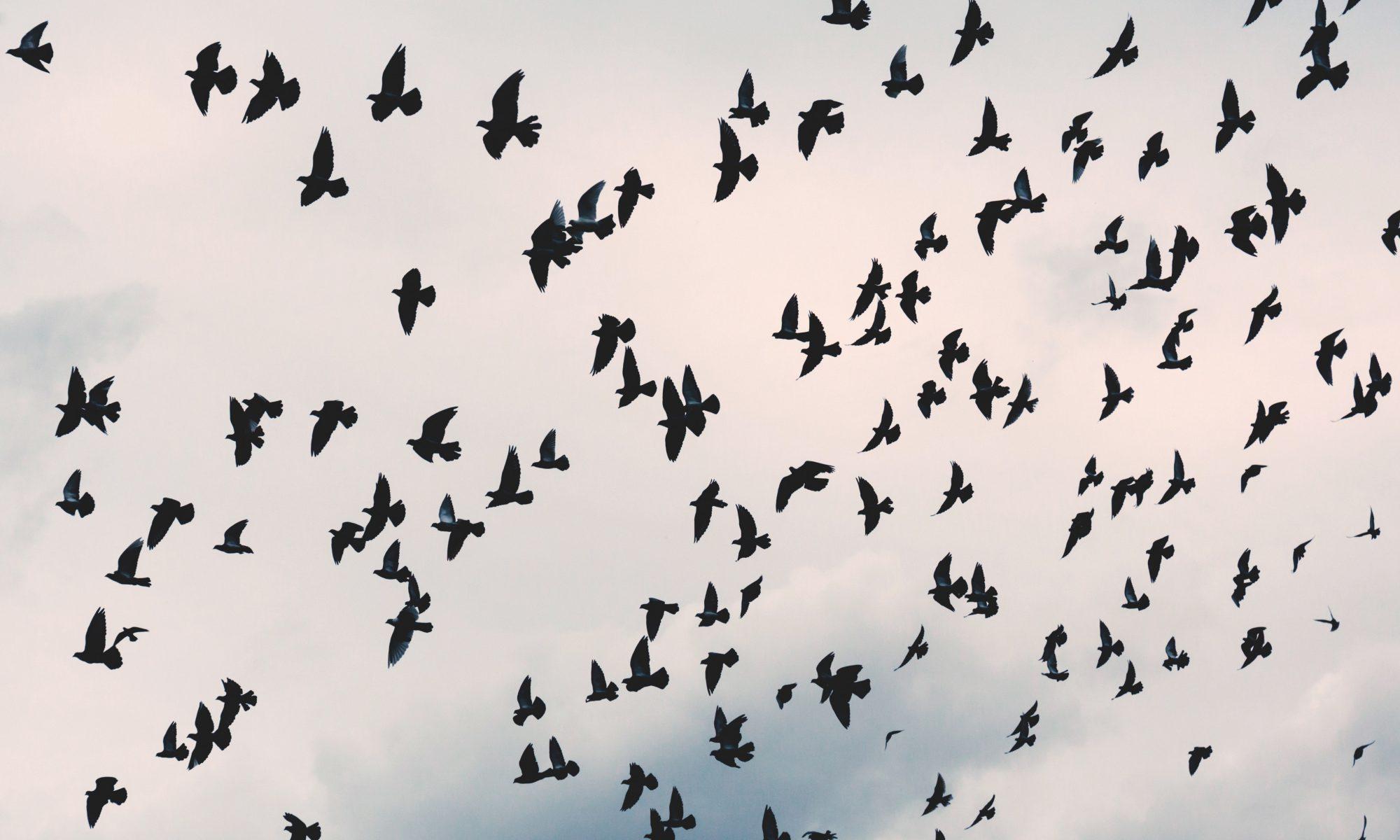 Talking Birds Media